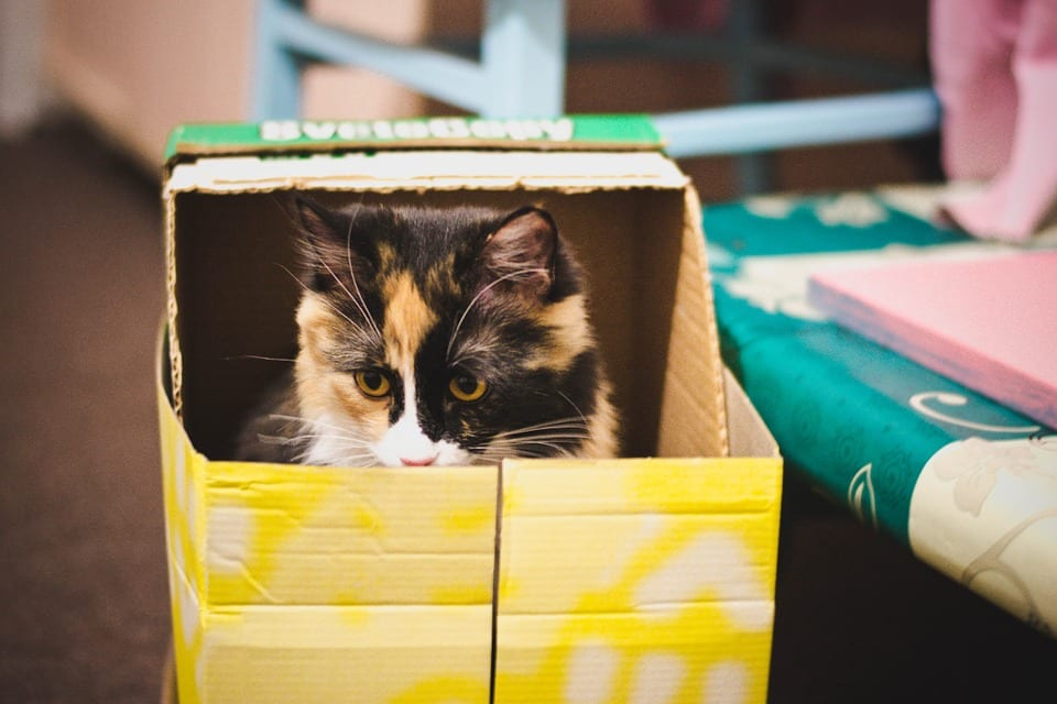 Outaouais moving tips to reduce pet stress